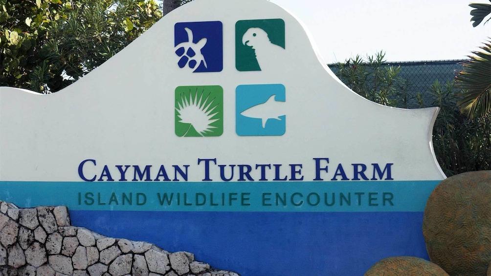 Cayman Turtle Farm Island Wildlife Encounter in Cayman Islands