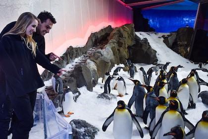 Activity Penguin Passport Experience