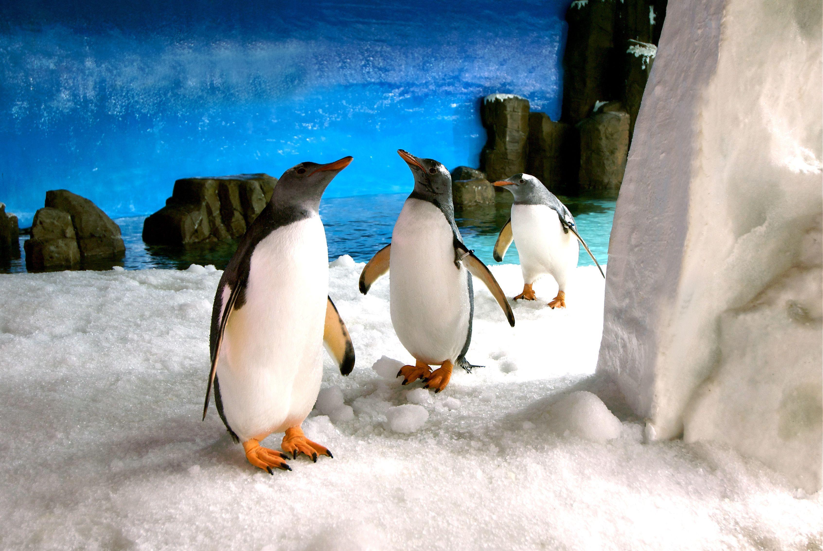 Experiencia Penguin Passport privado en el Acuario de Melbourne SEA LIFE