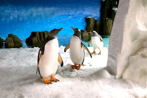 Private Penguin Passport Experience at SEA LIFE Melbourne Aquarium