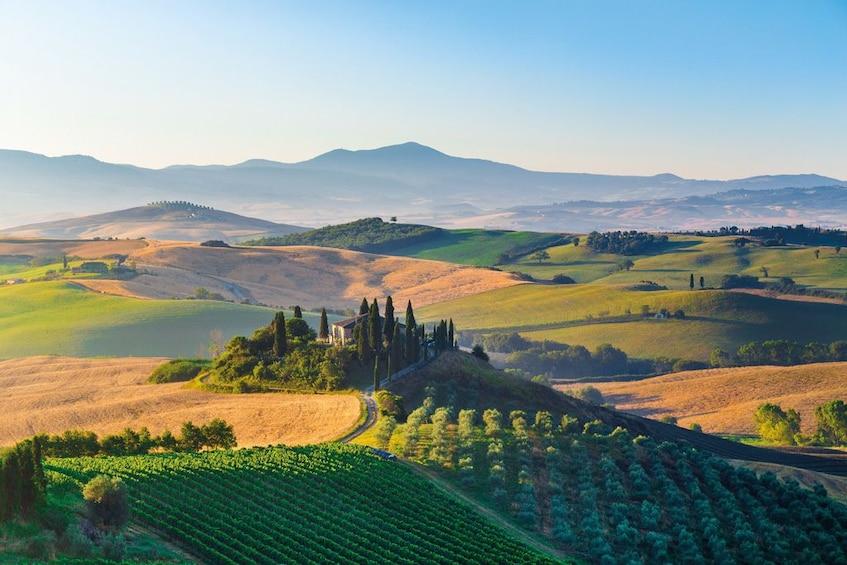 Apri foto 4 di 10. Montalcino, Pienza & Montepulciano Wine & Food Tour