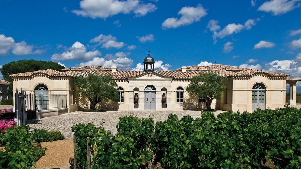 Bordéus vineyard in France