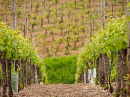 Alsace Full-Day Wine Tour From Strasbourg