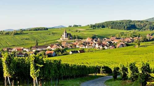 Alsace Vineyard in France