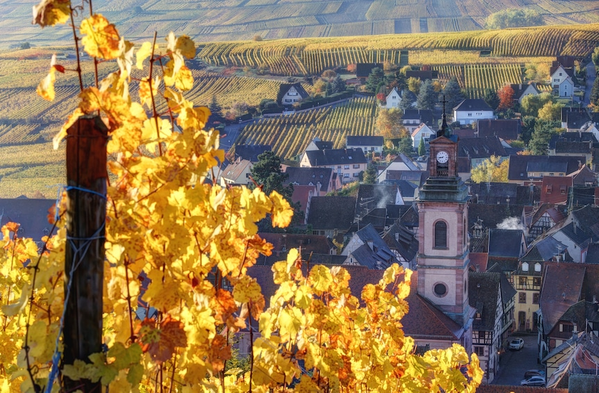 Show item 5 of 5. Pearls of Alsace Sightseeing Full-Day Tour From Strasbourg