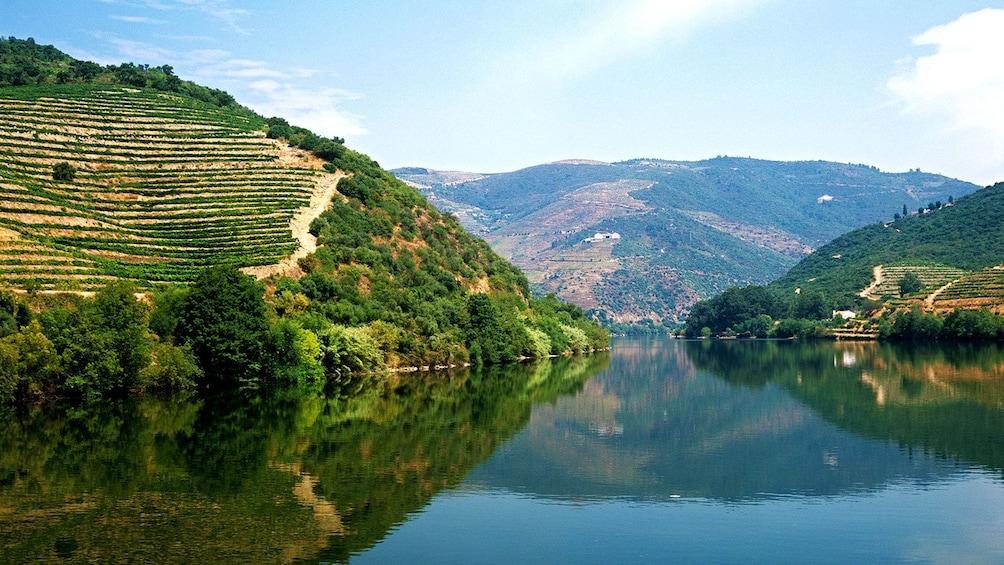 vineyards on the hillsides of Porto