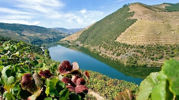 """Porto Wine Tour """"Douro Valley"""" - Portweinprobe & Mittagessen"""