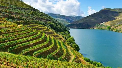 hillside vineyard in Porto