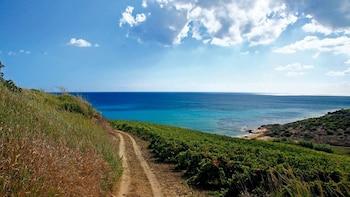 Tour di Selinunte e degustazione di vini a Sambuca di Sicilia