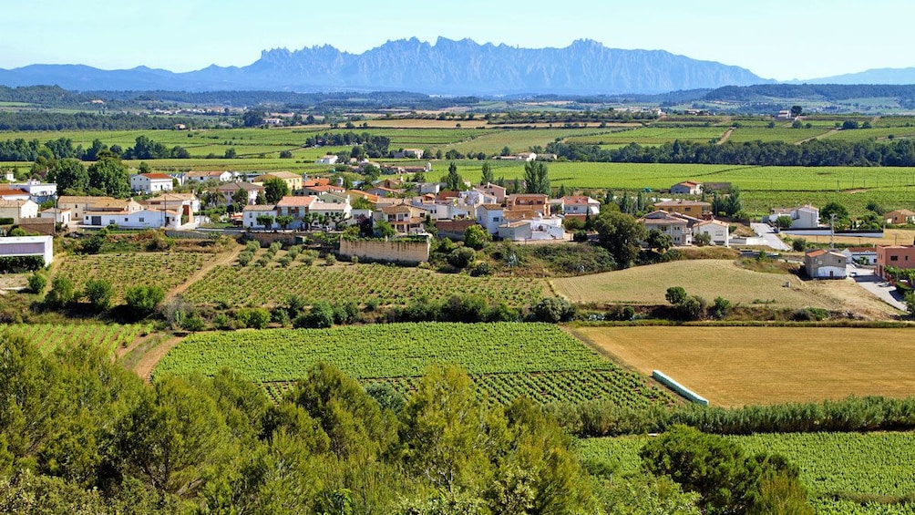 vineyard covered landscape in Barcelona