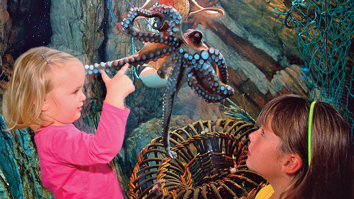 children fixated on an octopus behind aquarium tank in Manchester
