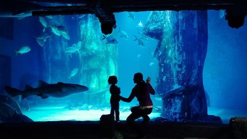 SEA LIFE Manchester Aquarium