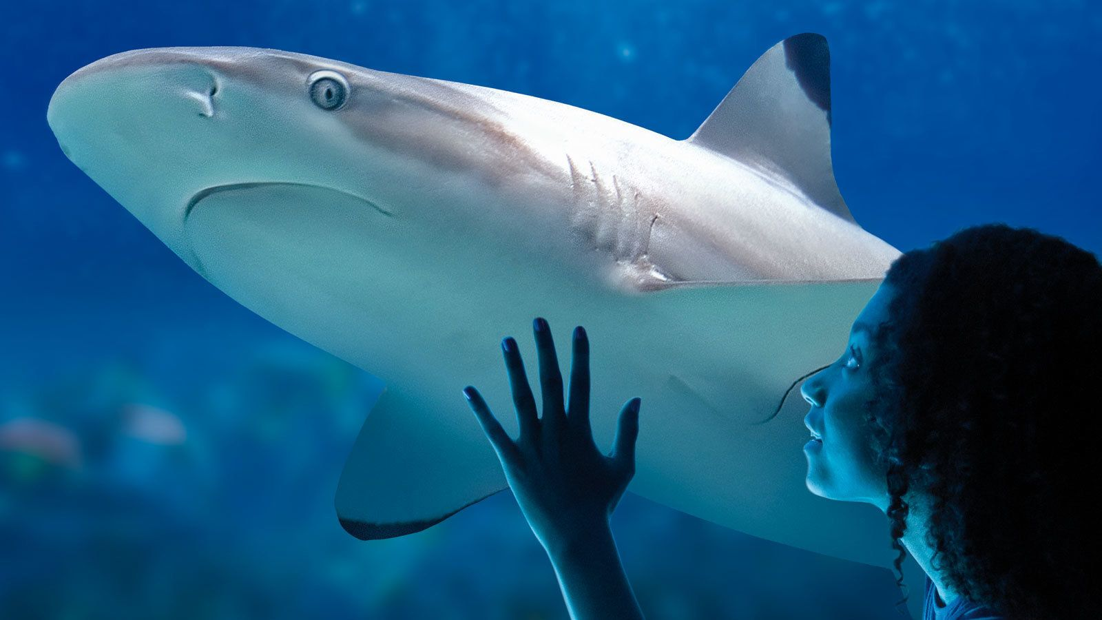 woman looking at a passing shark at the aquarium in Manchester