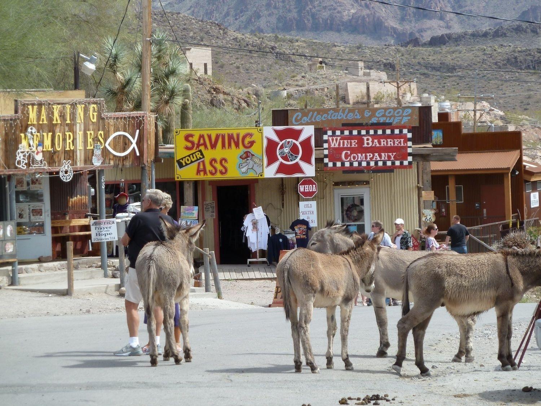 Wild Burro's of Oatman Arizona with Bindlestiff Tours.jpg