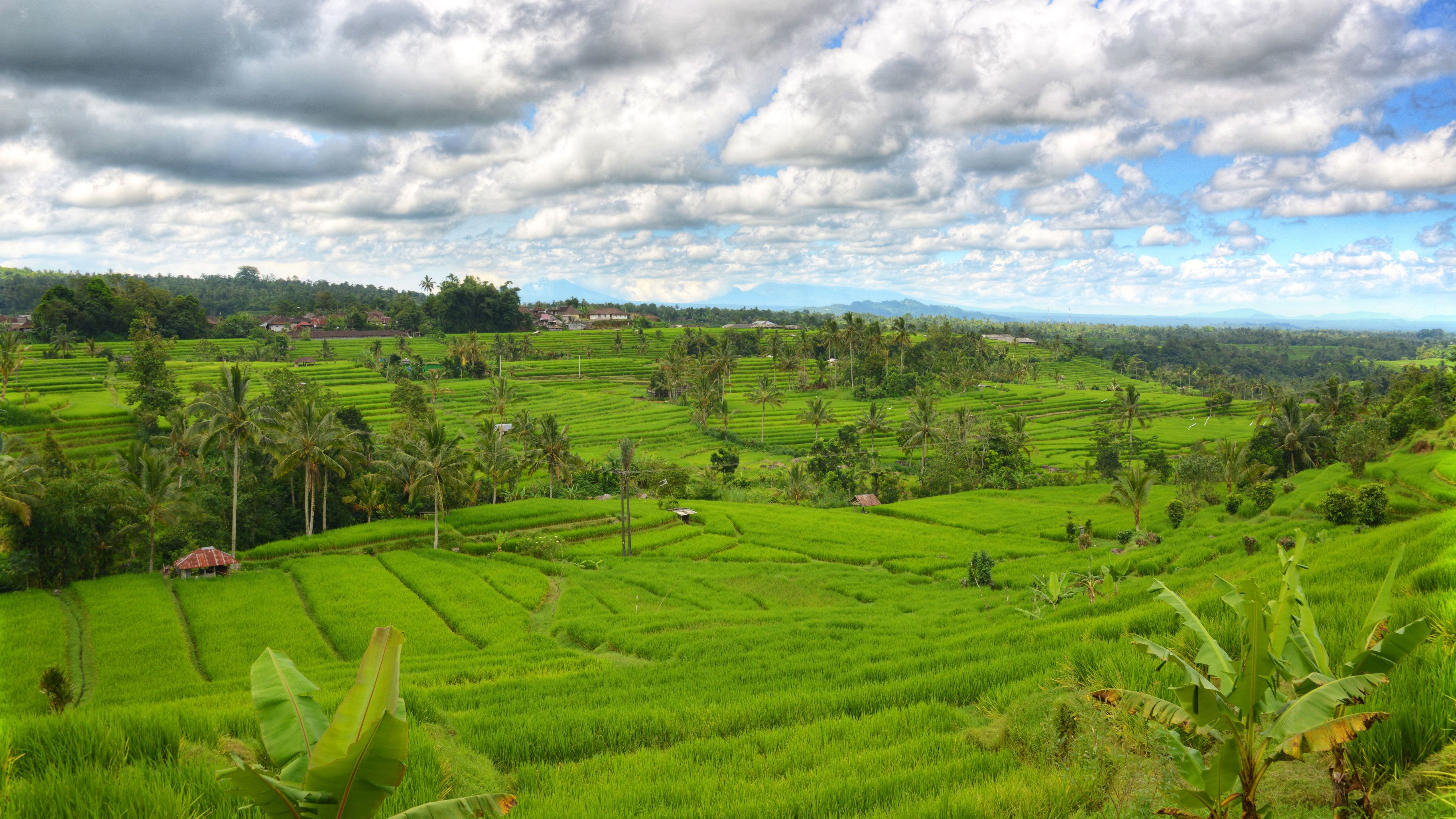 Panoramic view of lush green rice field in Bali