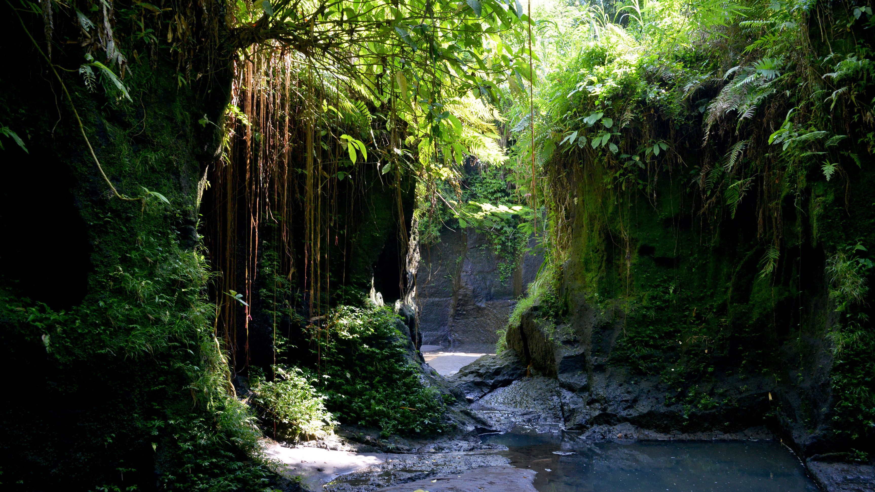 Lush vegetation growing amongst forest in Bali