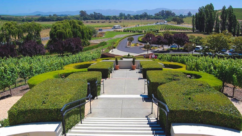 Landscape view of courtyard with vineyard in the distance.