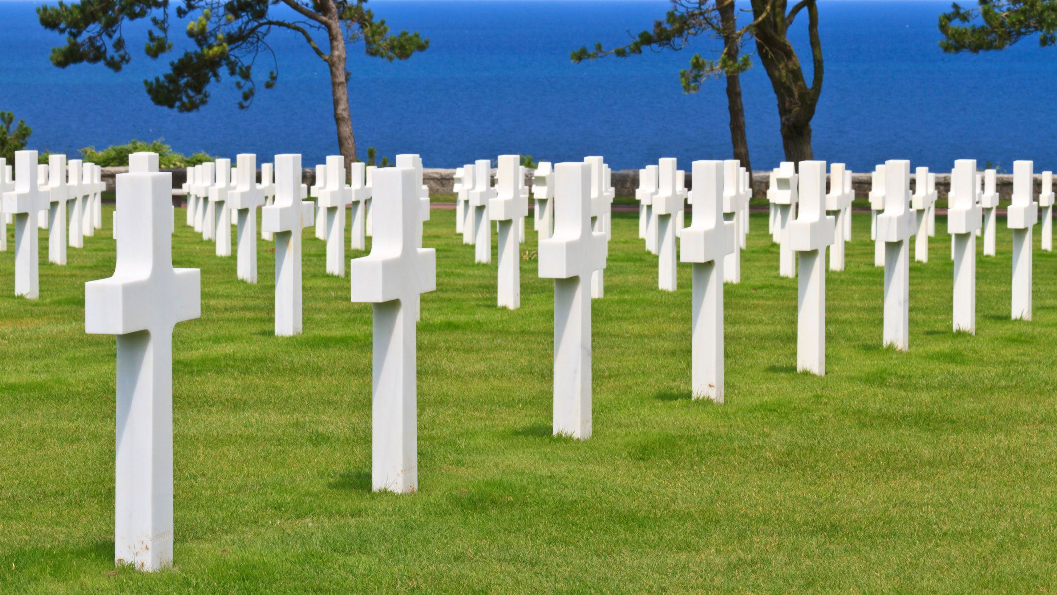 rows of white crosses