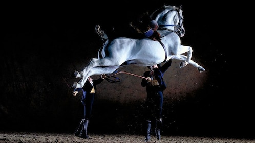 Horse leaping in the air during a performance