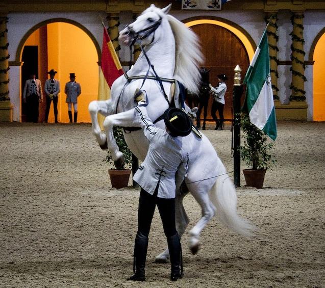 Foto 1 van 6. Jerez & Cádiz: Wine, Horses & Lights Full-Day Tour from Seville