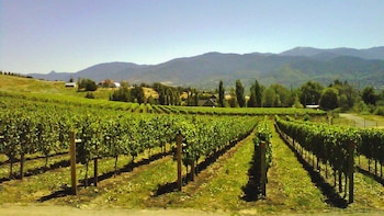 Private Fraser Valley Wine Tour with Lunch & Dessert