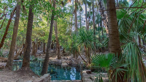 Landscape view of small clear pond surrounded by palm trees.