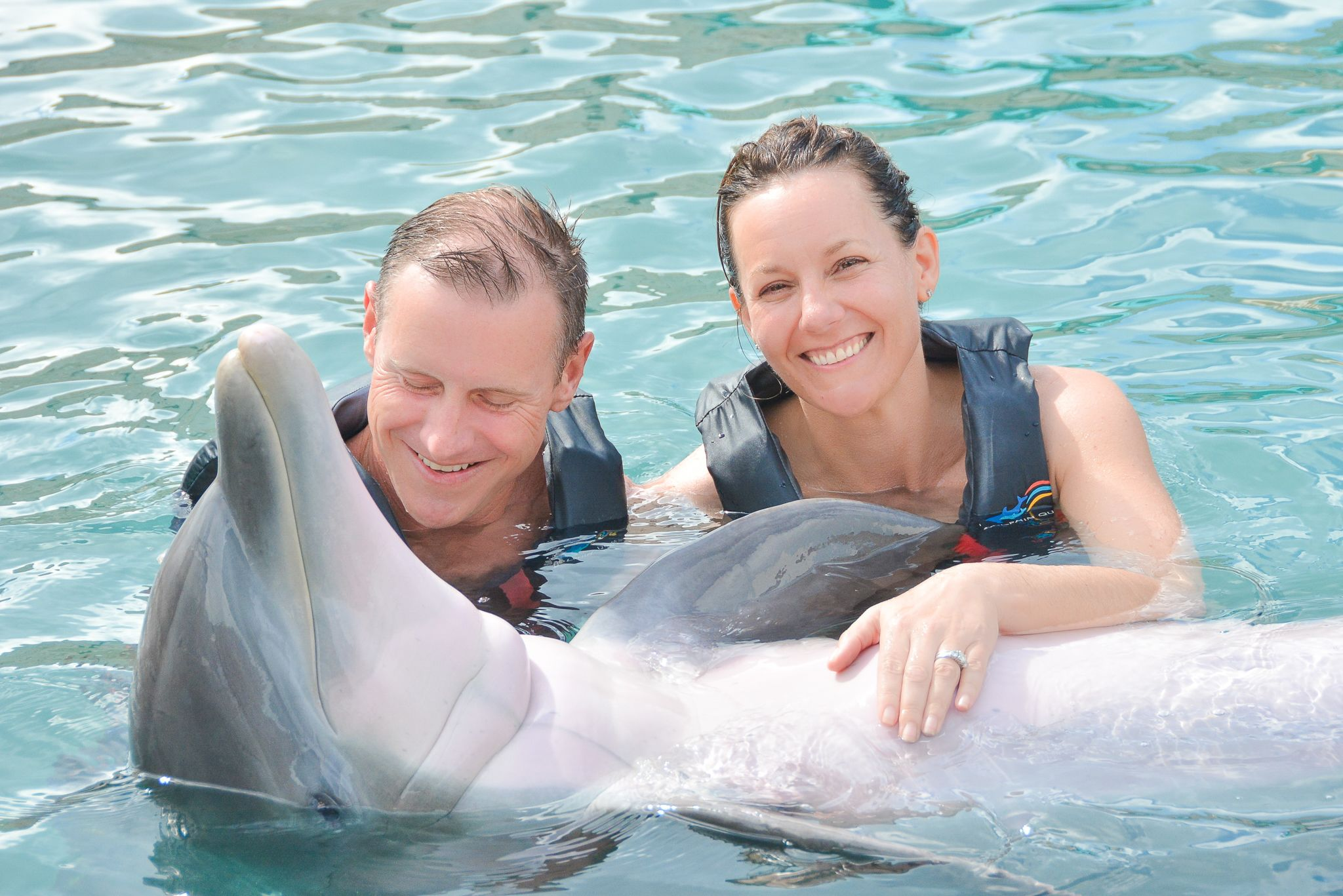 Private Dolphin-Swimming Experience with Museum Admission
