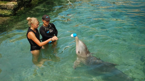 Girl being a trainer for the day for dolphins in Bermuda