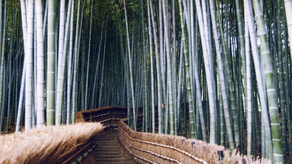 Show item 3 of 5. fenced path through a bamboo forest