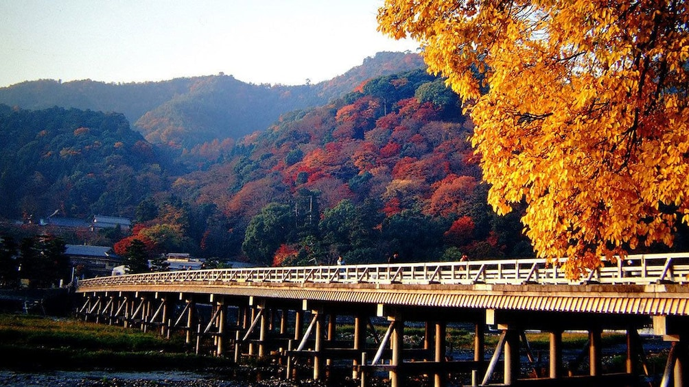 Show item 5 of 5. colorful trees along a bridge in Japan