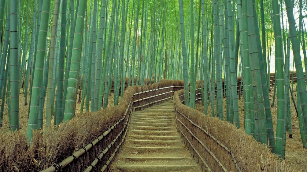 Show item 1 of 5. walking through a bamboo forest
