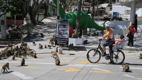 Bicyclist near a group of monkeys on the street in Hua Hin