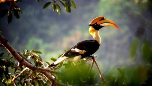 Bird at the Kaeng Krachan National Park in Thailand