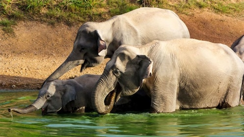 Elephants playing in the water at Kui Buri
