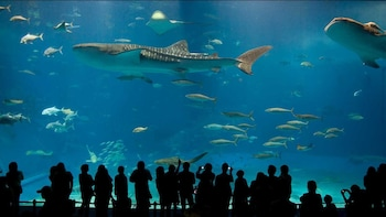 Okinawa: Churaumi Aquarium & Pineapple Park