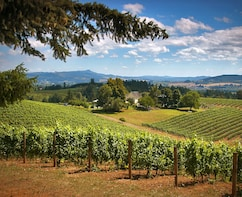 Willamette Valley Wine Tasting Tour from Portland