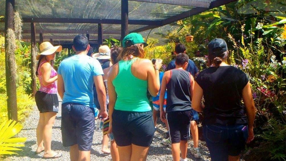 Tour group walking through a garden in Fiji