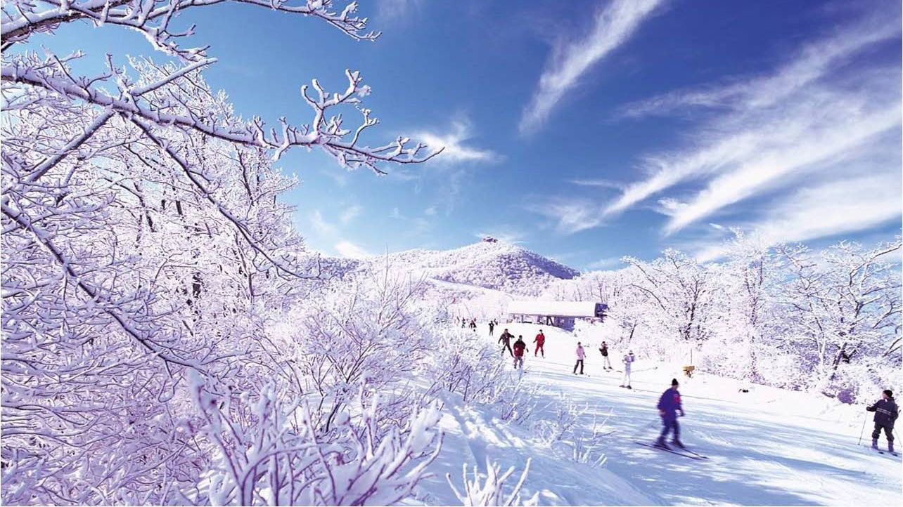 frozen trees with skiers and snowboarders in background