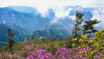 Full-Day Tour to Seoraksan National Park & Daepo Port