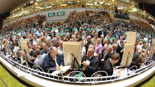 crowded stadium in Dublin