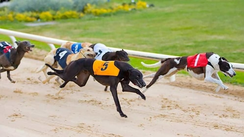 racing greyhounds in Dublin