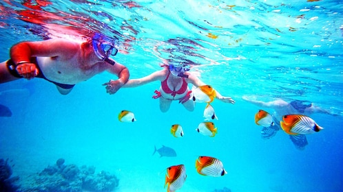 Couple snorkeling around tropical fish in Cook Islands