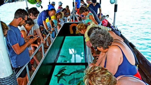 looking through the glass bottomed boat at a lagoon
