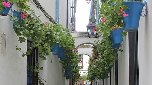 potted plant lined alley