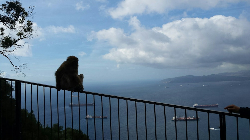 Show item 5 of 10. Gibraltar Full-Day Excursion