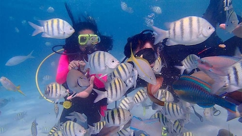 Close up view of guests scuba diving next to tropical fish in St. Thomas & St. John, US Virgin Islands