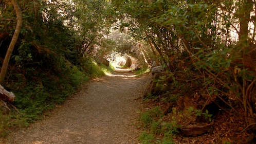 A forest pathway with arching trees