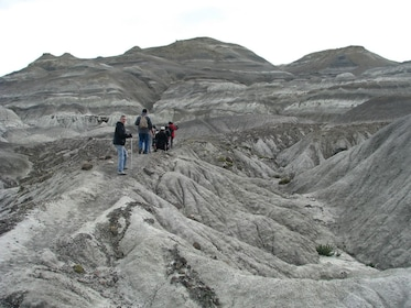 Petrified Forest Tour with Lunch 05.jpg