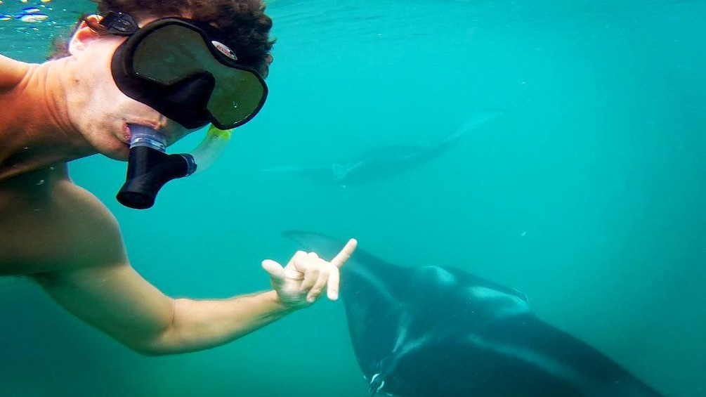 Show item 3 of 6. Man snorkeling with manta rays in Oahu