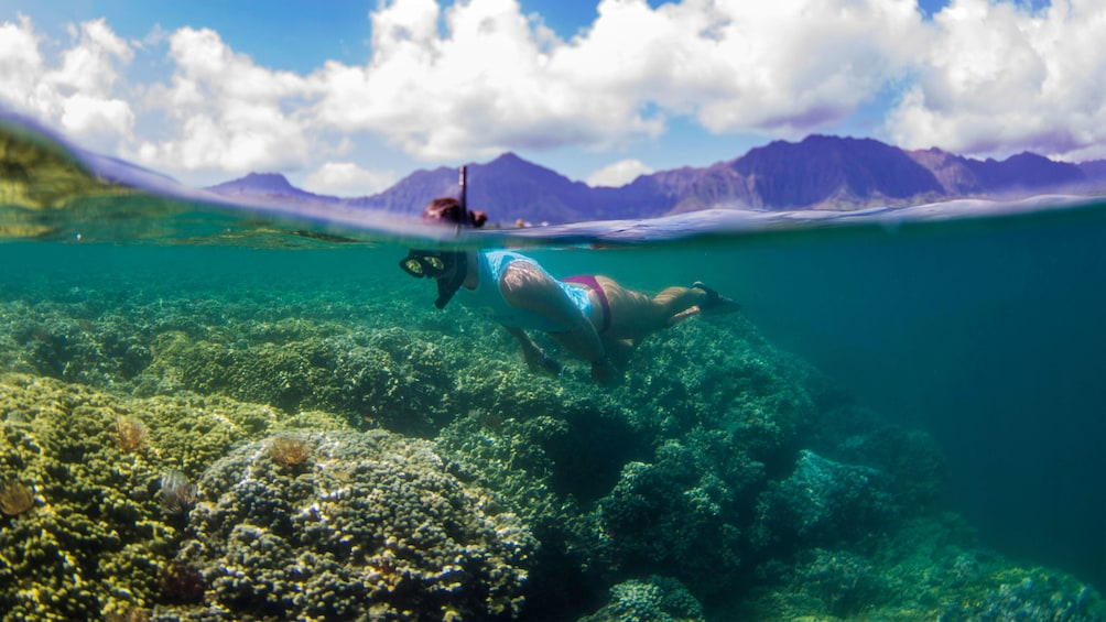 Show item 6 of 6. Snorkeling woman swimming over the coral reef on Oahu